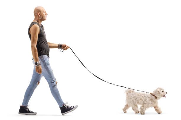 Hipster man walking a small white dog picture id1176398984?b=1&k=6&m=1176398984&s=612x612&w=0&h= 7widaybbpsqcvfuk5yfj28oimy4j6 gda1oze7kbi4=