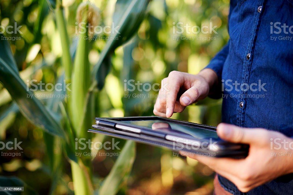 Su maíz está creciendo a un ritmo impresionante - foto de stock