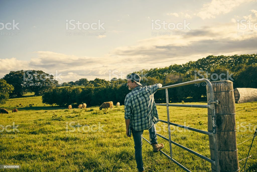 His eyes are always on the farm stock photo
