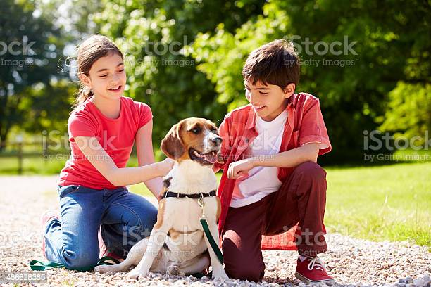 Hispanic children taking dog for walk in countryside picture id466628385?b=1&k=6&m=466628385&s=612x612&h=mv8xkoxt 61gnkkwolgwx uhbizdy51zzpzxarx1tpa=