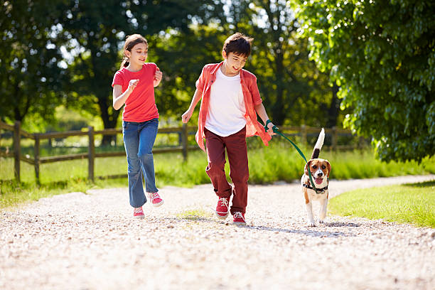 Hispanic Children Taking Dog For Walk In Countryside stock photo