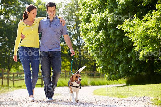 Hispanic Couple Taking Dog For Walk In Countryside Stock Photo - Download Image Now