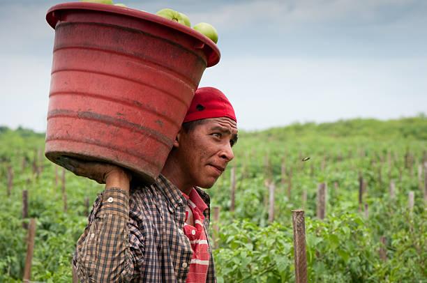 Hispanic Immigrant in US Harvest