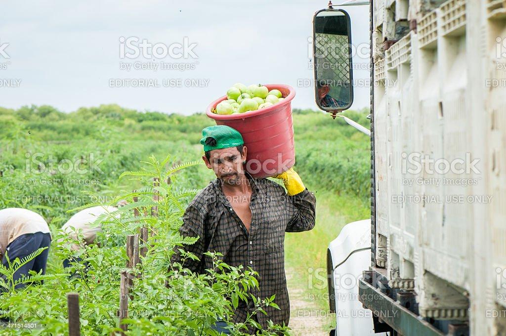 Hispanic Einwanderer in den USA Harvest