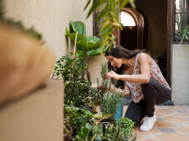 Hispanic woman taking care of plants at home stock photo
