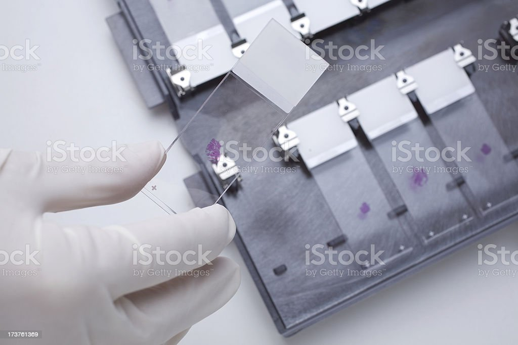 Histology royalty-free stock photo