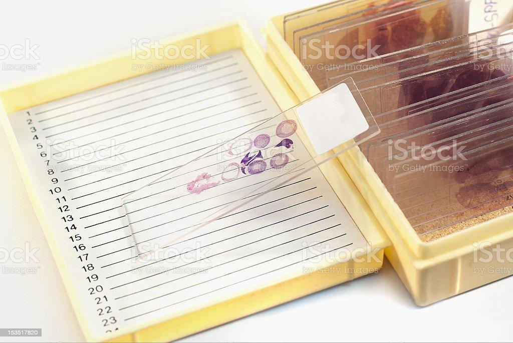 Histology slides in box royalty-free stock photo