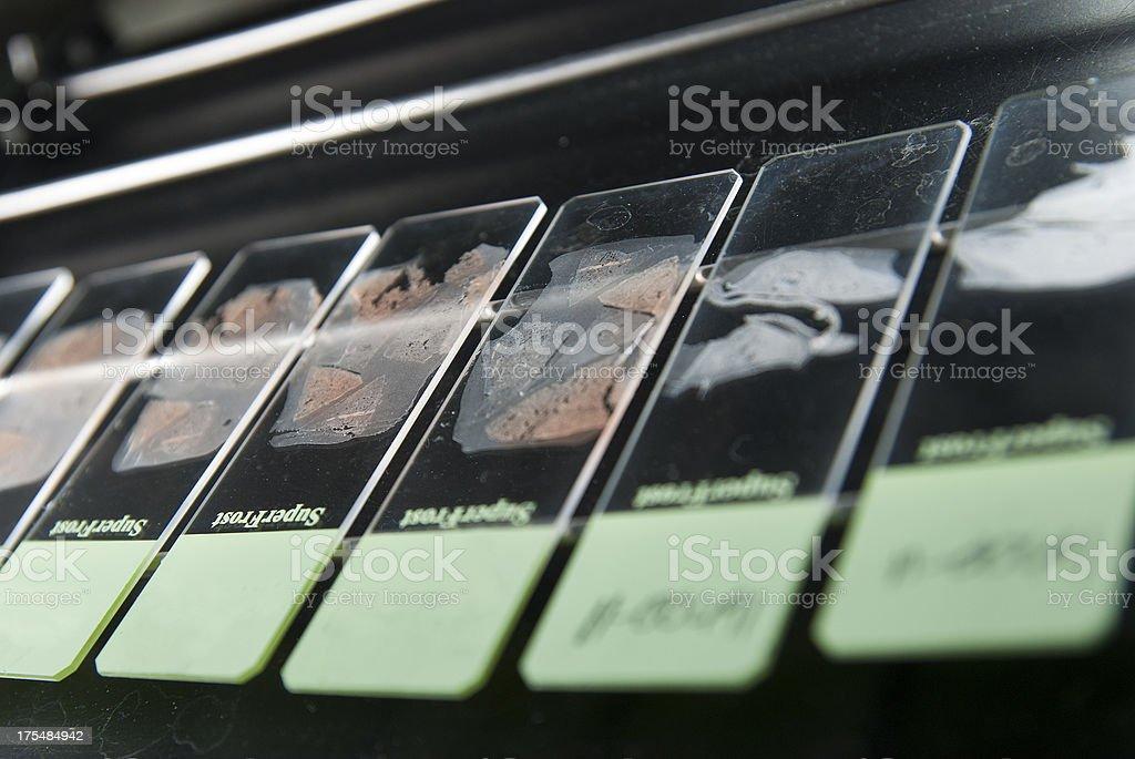 Histology slides on dryer stock photo