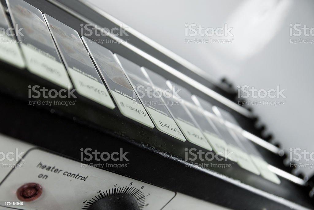 Histology slides on dryer royalty-free stock photo
