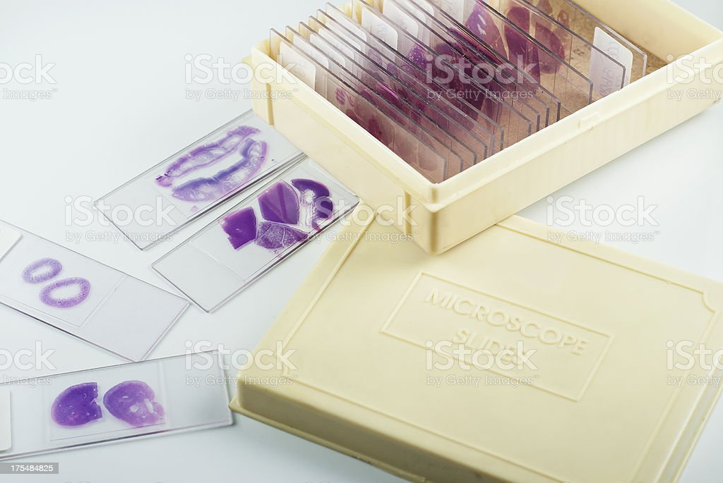 Histology slides with container royalty-free stock photo