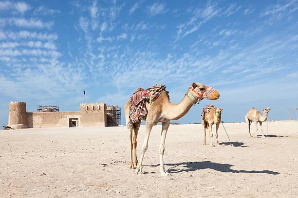 historique fort de al zubara au qatar - qatar photos et images de collection