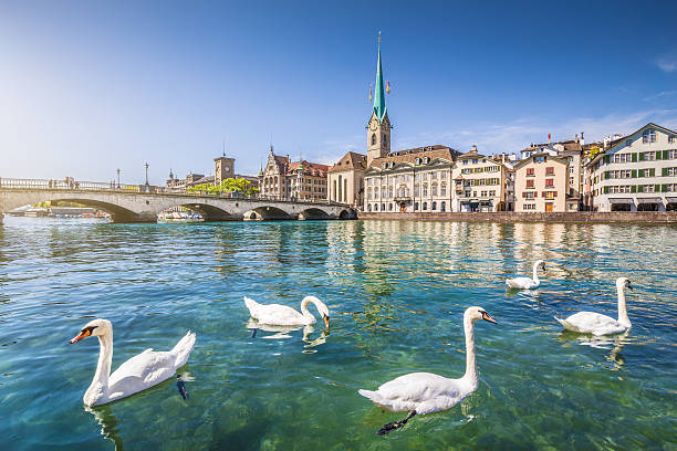 Historic city of Zurich with river Limmat, Switzerland Historic city center of Zurich with famous Fraumunster Church and swans on river Limmat, Canton of Zurich, Switzerland. fraumunster stock pictures, royalty-free photos & images