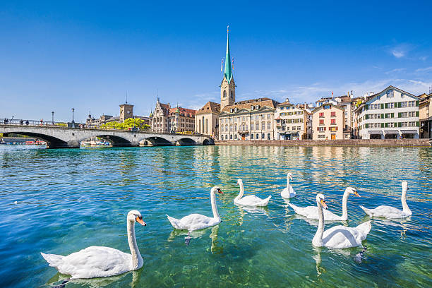 Historic city of Zurich with river Limmat, Switzerland Beautiful view of the historic city center of Zurich with famous Fraumunster Church and swans on river Limmat on a sunny day with blue sky, Canton of Zurich, Switzerland. limmat river stock pictures, royalty-free photos & images