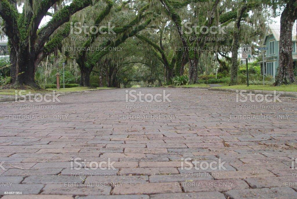 Historic Florida brick street under Live Oak canopy, Brooksville stock photo