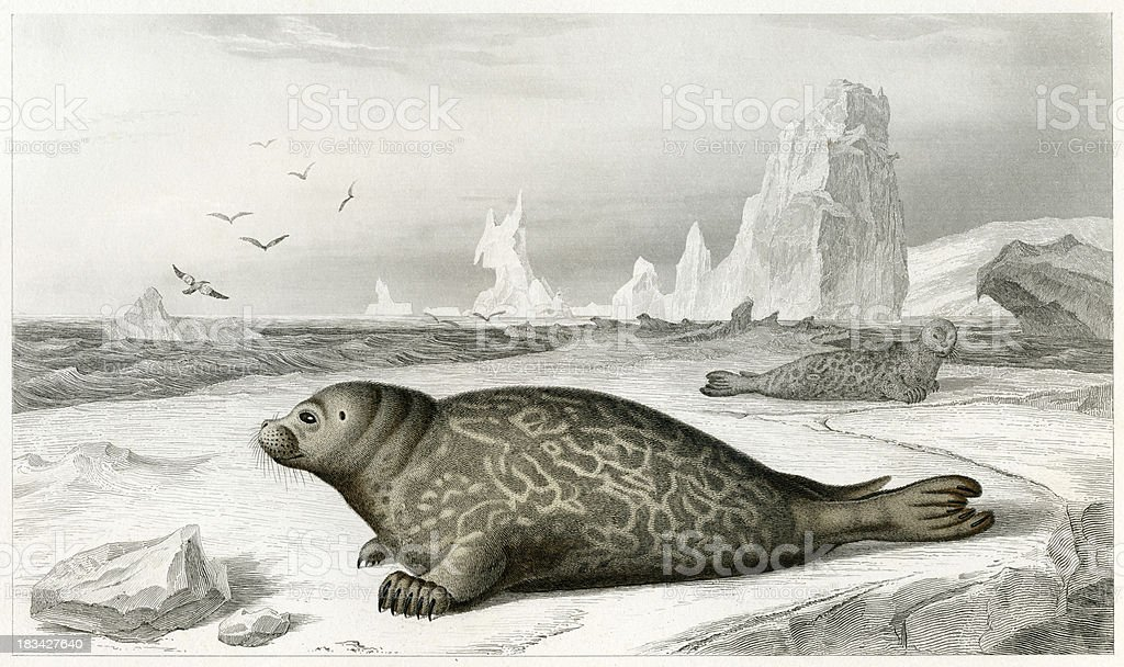 historic illustration of a seal stock photo