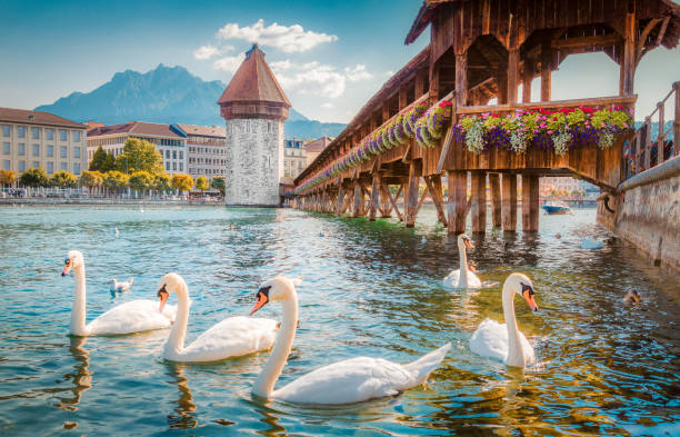 historic town of lucerne with famous chapel bridge, switzerland - lucerne stock pictures, royalty-free photos & images