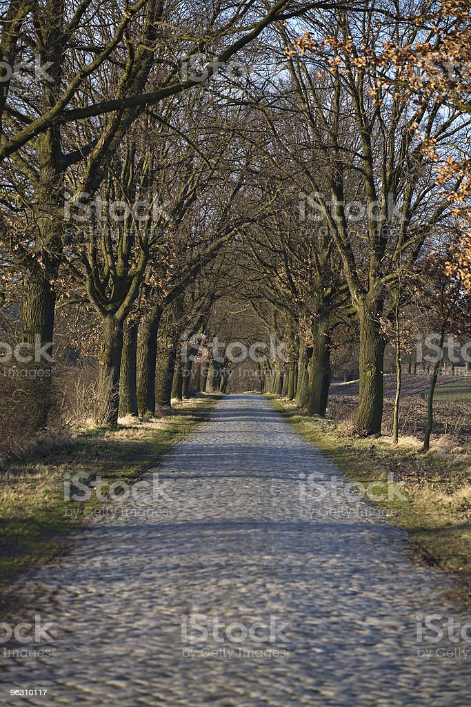 Historic treelined avenue in Mecklenburg-Vorpommern royalty-free stock photo