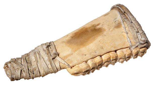 Historical bone tool stock photo
