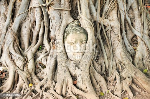 Historical Buddha head in Ayutthaya
