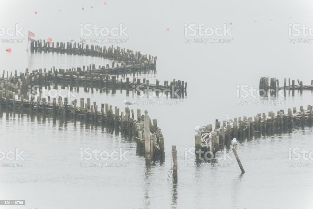 Historical herring weir in morning haze stock photo