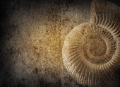 History and palaeontology old grunge background.