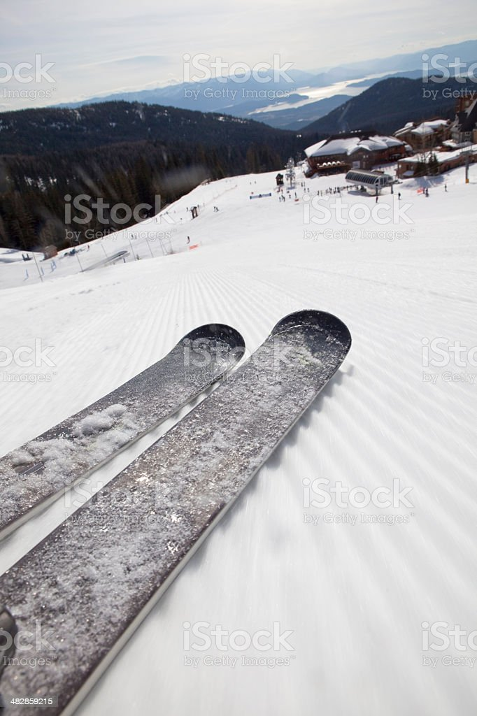 HItting the groomers on a sunny day. stock photo