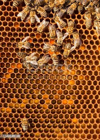 Hive close up