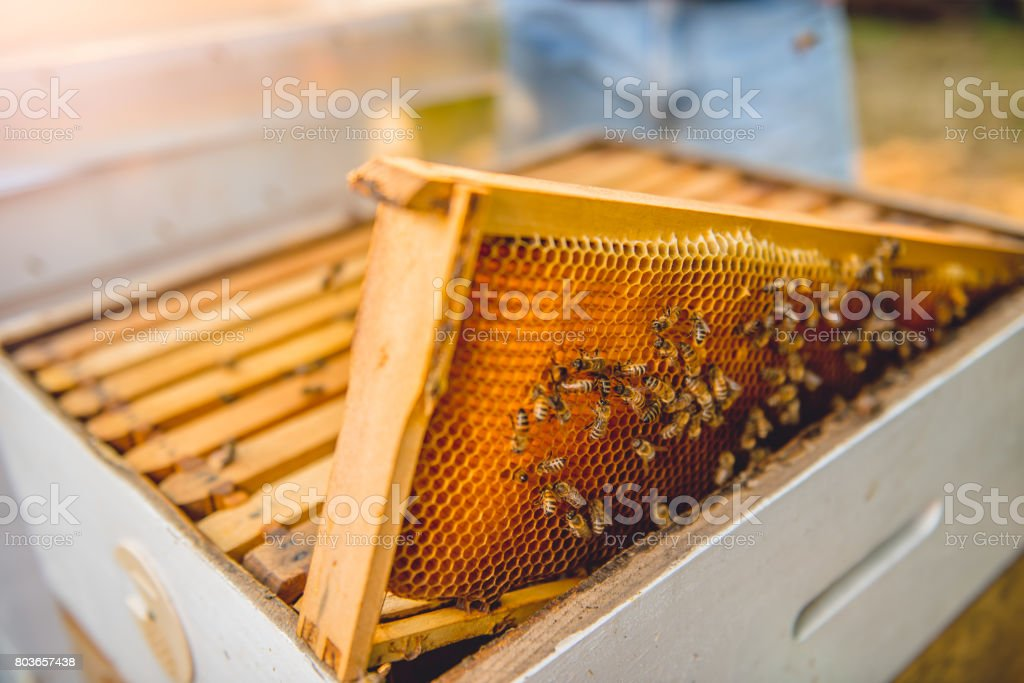 Hive frame with bees stock photo
