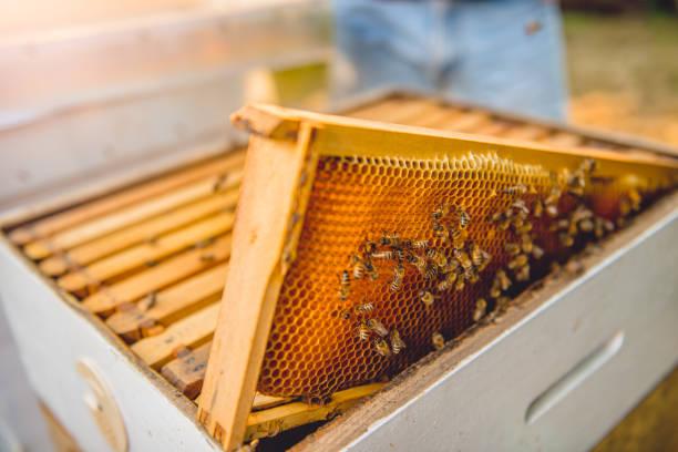rahmen der bienenkorb mit bienen - bienenstock stock-fotos und bilder