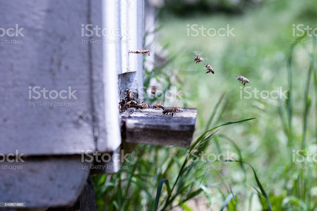 Hive in bee stock photo