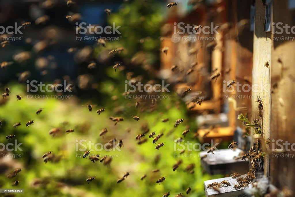 Hives in an apiary with bees flying to landing boards Hives in an apiary with bees flying to the landing boards in a green garden Abundance Stock Photo