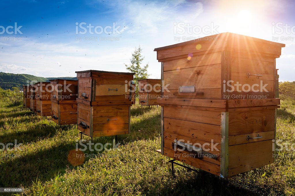 Hives in an apiary with bees flying to the landing stock photo