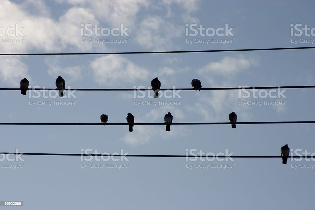 Hi-Wire Birds royalty-free stock photo