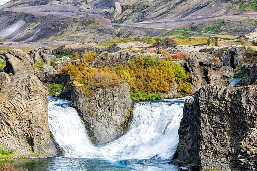 istock Hjalparfoss waterfall landscape closeup of orange tree foliage in south Iceland in autumn fall season with water falling and road highway in background 1131408581