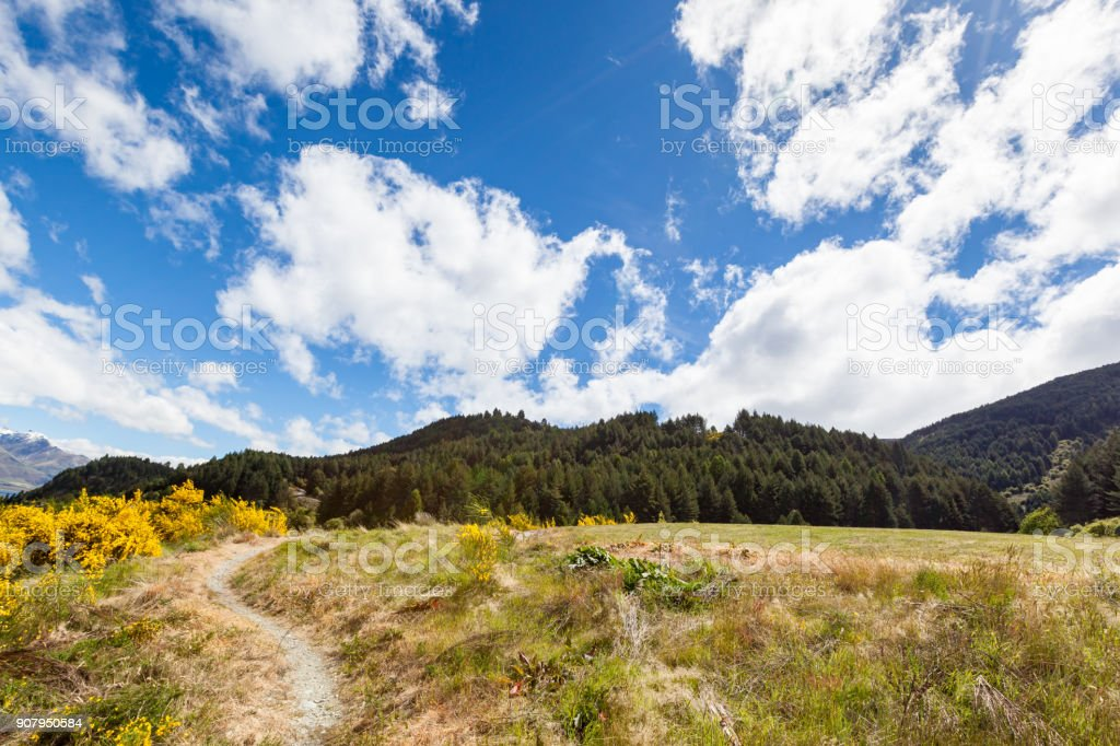 Hking path, Forest stock photo