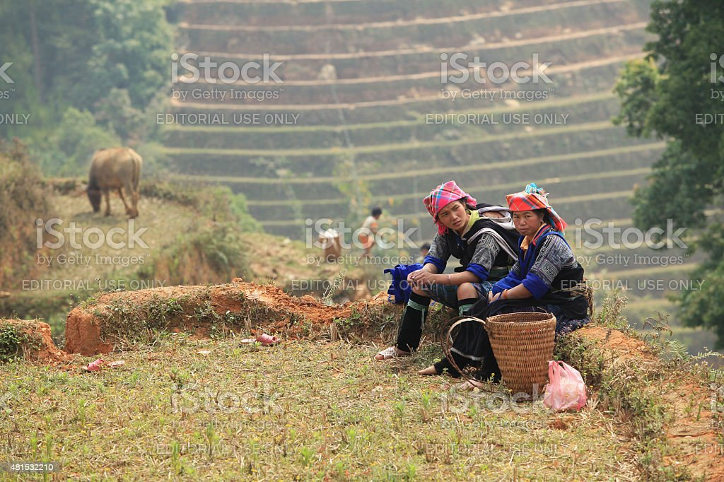 Hmong minority women on a paddy terraced field stock photo