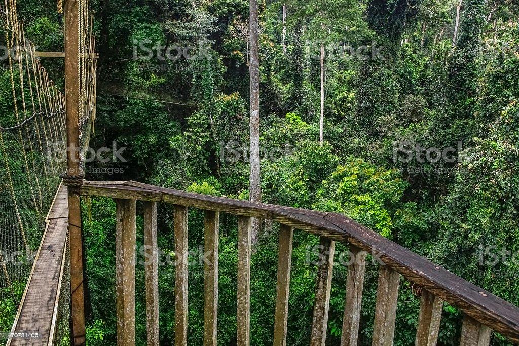Hängebrücke im Wald stock photo