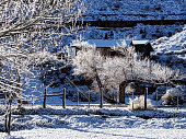 Hoar frost on cottonwood tree and willow in rock garden in Rockville Utah near Zion National Park Utah