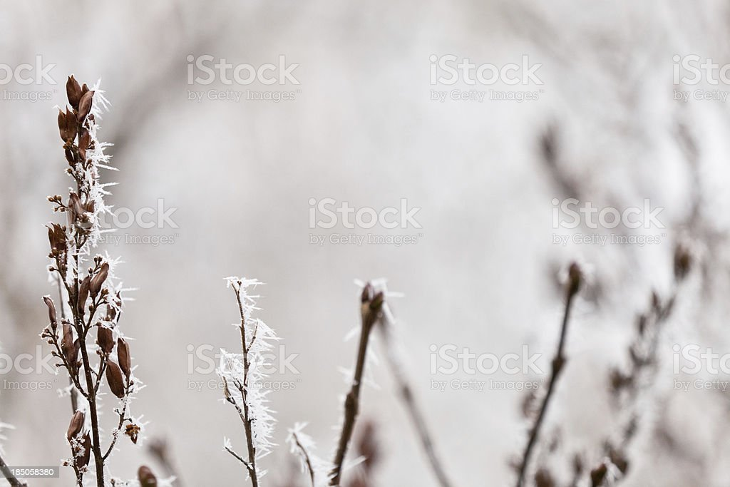 Hoar Frost On Dried Vegetation stock photo