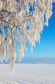 Hoarfrost on tree branches in a rural landscape