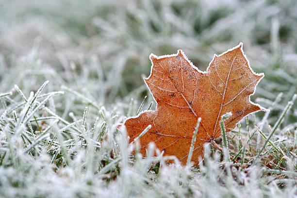 Hoar-frost stock photo