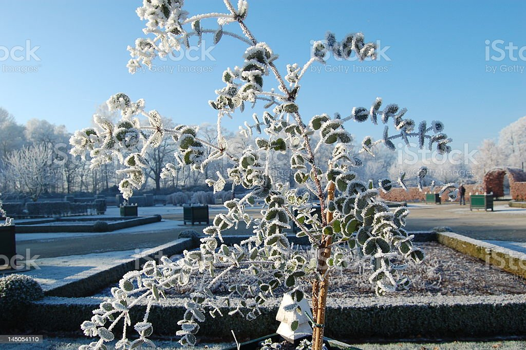 hoar-frost stock photo