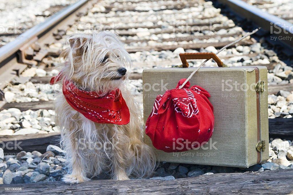 Hobo-Hund auf der Gleise – Foto