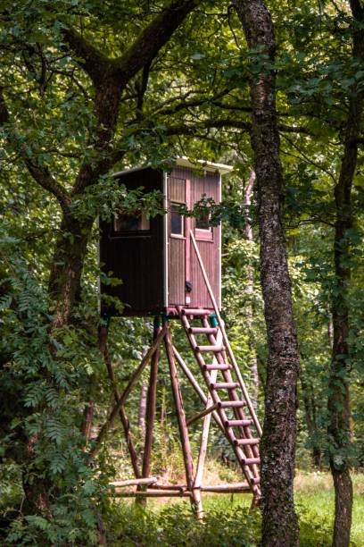 Hochsitz Am Rothaarsteig befindet sich dieser Jägersitz. hunting blind stock pictures, royalty-free photos & images