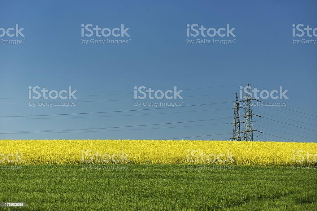 Hochspannung hinter dem Rapsfeld stock photo