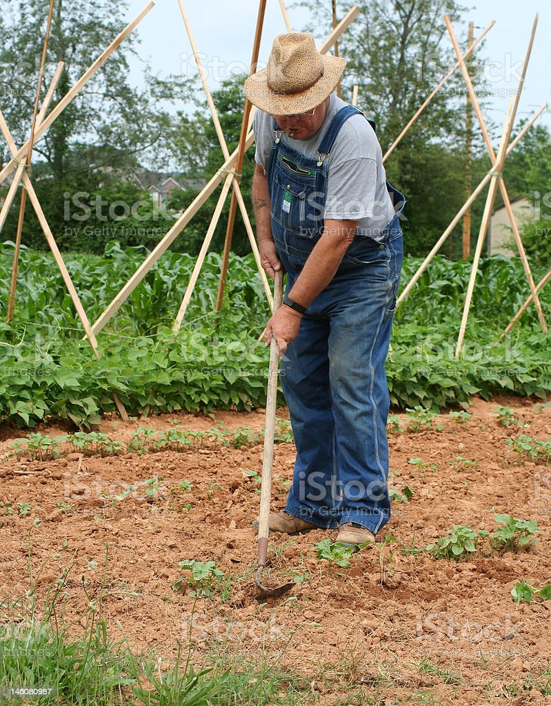 Hoeing the Garden royalty-free stock photo