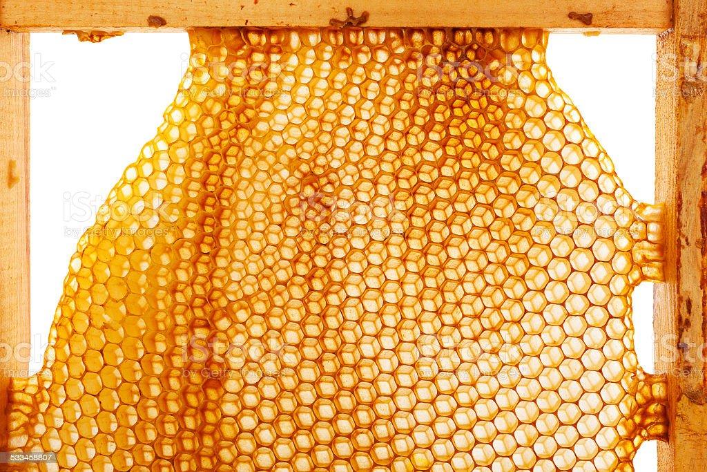 Hoeny and Beekeeping. stock photo