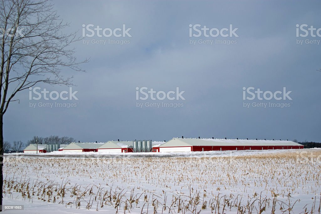 Hog Barns en hiver - Photo