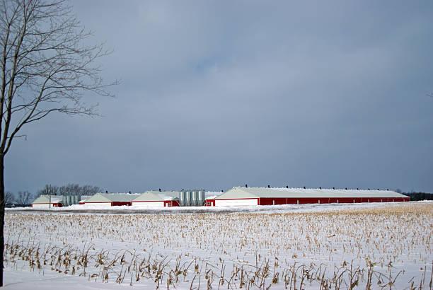 Hog Barns en hiver - Photo