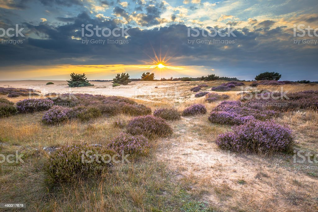 Hoge Veluwe Sand Heathland stock photo
